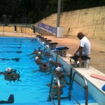 waterpolo_allenamento