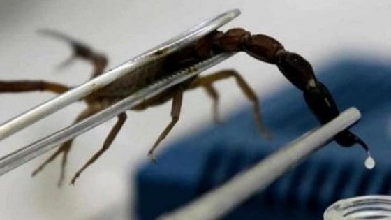 Veleno di scorpione